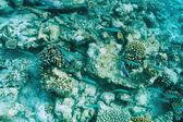 Korálový útes na maledivy — Stock fotografie
