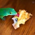 Green gecko lizard — Stock Photo #49581961