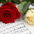 Foto Stock: Red and white rose
