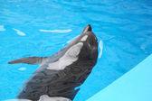 Delphin im wasser — Stockfoto