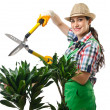 Womgardener trimming plans on white — Stock Photo #12651262