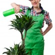 Girl watering plants on white — Foto de Stock