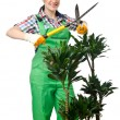Woman gardener trimming plans on white — Stock Photo
