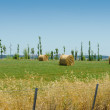 Field with rolls of hay on summer day — Stock Photo