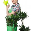 Woman watering plants on white — Stock Photo