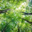 Green forest during bright summer day - Stock fotografie