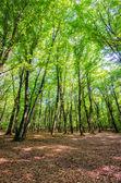 Zielony las w dzień jasny lato — Zdjęcie stockowe