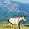 Lonely horse at the meadow - Stockfoto