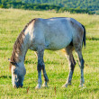 Lonely horse at the meadow — Stock Photo
