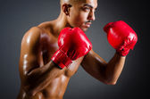 Boxer musculaire en prise de vue studio — Photo