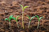 Green seedlings in new life concept — Stock Photo