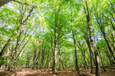 Green forest during bright summer day — Stock Photo