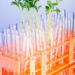 Lab experiment with green seedlings — Stock Photo