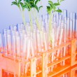 Lab experiment with green seedlings — Stock Photo #16995345