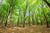 Grünen wäldern während hellen sommertag — Stockfoto