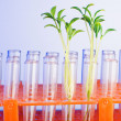 Royalty-Free Stock Photo: Lab experiment with green seedlings