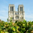 Notre Dame de Paris cathedral in summer day - Стоковая фотография