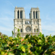 Notre Dame de Paris cathedral in summer day - Foto Stock