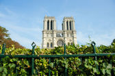 Notre Dame de Paris cathedral in summer day — Stock Photo