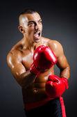 Muscular boxer in studio shooting — Stock Photo