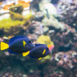Tropical fish under the water  — Stock Photo