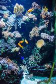 Poissons tropicaux sous l'eau — Photo