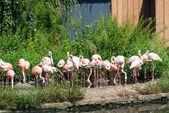 明るい夏の日ピンク lamingoes — ストック写真