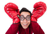Funny boxer — Stock Photo