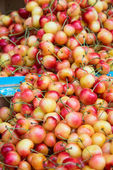 Cherries on sale — Foto Stock