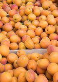 Apricots on sale — Stock Photo