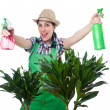 Woman watering plants — Stock Photo #45550435