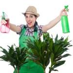 Woman watering plants — Stock Photo