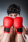 Bokser mięśni — Zdjęcie stockowe