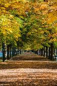 Callejón con árboles — Foto de Stock