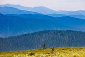 Paysage de montagne dans la journée d'été ensoleillée — Photo