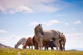 Horses on mountain peak close up — Stock Photo