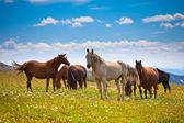 Horse behavior on mountain peak — Stock Photo