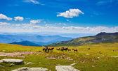 Horses on mountain peak — Stock Photo