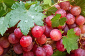 Red grape with leaves — Stock Photo
