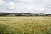 Wheat field near the Kassel — Stock Photo