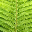 Stock Photo: Green fern leaf close-up, vertical image