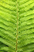Green fern leaf close-up, vertical image — Stock Photo