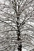 Snowfall — Stock Photo