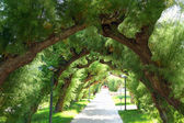 Branches of trees in the form of an arch — Stock Photo