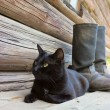 Black cat and tarpaulin boots_2 — Stock Photo