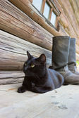 Black cat and tarpaulin boots_2 — Stok fotoğraf
