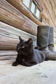 Black cat and tarpaulin boots_2 — Zdjęcie stockowe