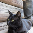 Black cat and tarpaulin boots_4 — Foto de Stock