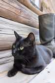 Black cat and tarpaulin boots_4 — Stock Photo
