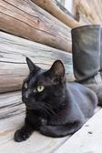 Black cat and tarpaulin boots_4 — Zdjęcie stockowe